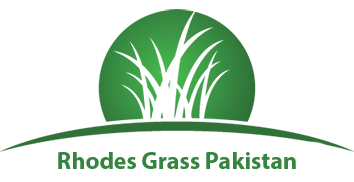 Rhodes Grass in Pakistan